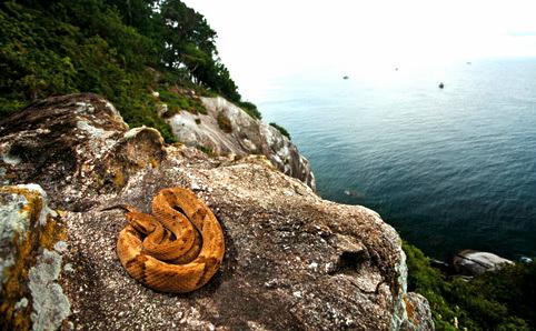 Ilha da Queimada Grande, snake island, brazil, sao paolo