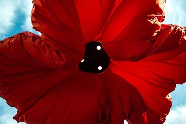 warde, jerusalem, inflating flowers